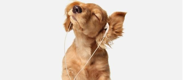 best-headphones-under-1001-642x282