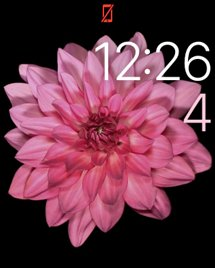 215x268x10_clock_face.png.pagespeed.gp+jp+jw+pj+js+rj+rp+rw+ri+cp+md.ic.Leu4PC_KlB